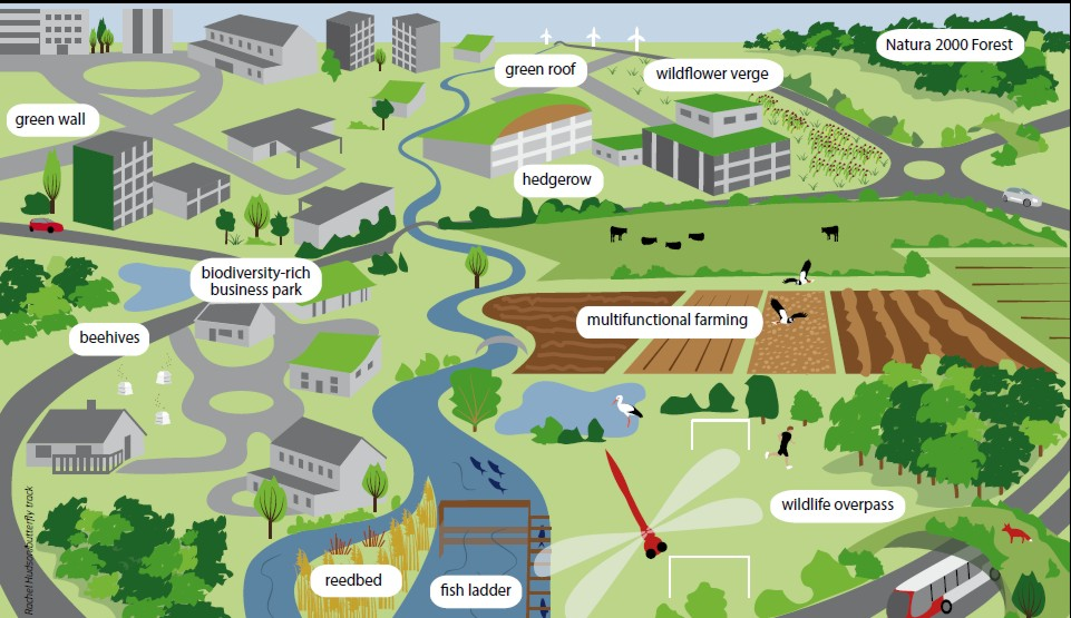 One EU vision of green infrastructure